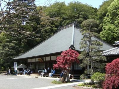 2010.5.02 つつじの名所 青梅・塩船観音寺と薬王寺 055.jpg