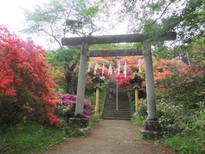 青梅・愛宕神社と海禅寺のつつじ 2011.5.8 011.jpg