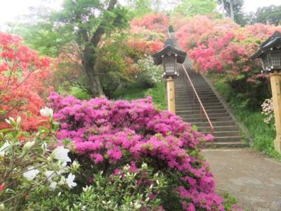 青梅・愛宕神社と海禅寺のつつじ 2011.5.8 030.jpg