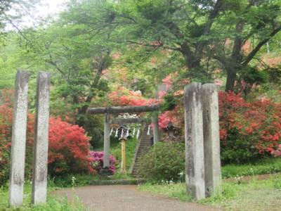 青梅・愛宕神社と海禅寺のつつじ 2011.5.8 031.jpg