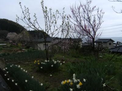 2009.4.16~18 第42回奥の細道を歩く 名立~糸魚川~親不知~市振 004.jpg