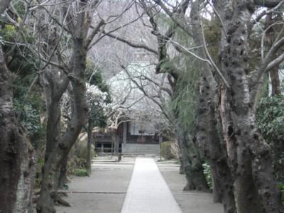 2010.2.09 湘南の温泉めぐりと鎌倉・報国寺、杉本寺を訪ねる! 056.jpg