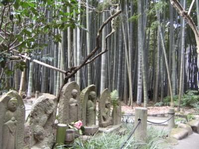 2010.2.09 湘南の温泉めぐりと鎌倉・報国寺、杉本寺を訪ねる! 072.jpg