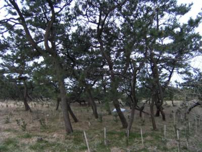 第41回奥の細道を歩く 米山~上越~鵜の浜温泉~名立 2009年2月12~14日 061.jpg