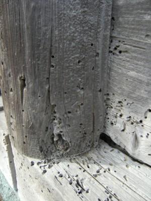 第41回奥の細道を歩く 米山~上越~鵜の浜温泉~名立 2009年2月12~14日 095.jpg